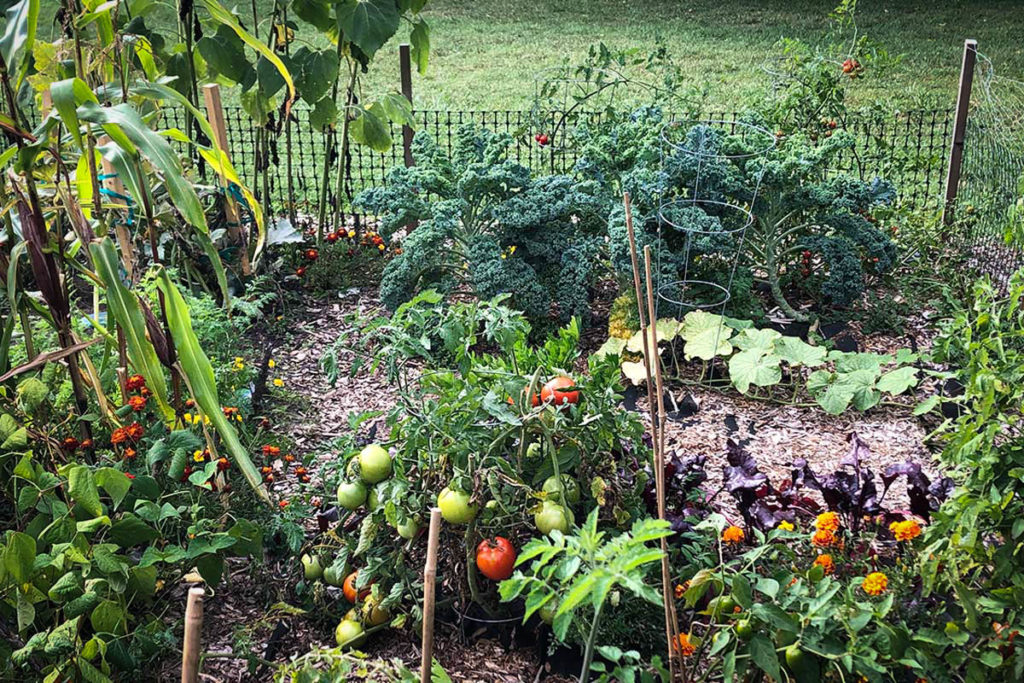 Corn, kale, tomatoes and zinnias